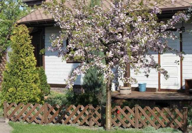 Дерев'яні паркани - 13